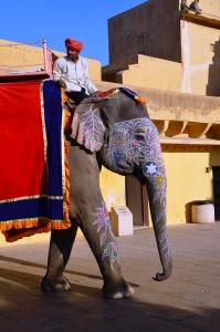 Elefante em Jaipur